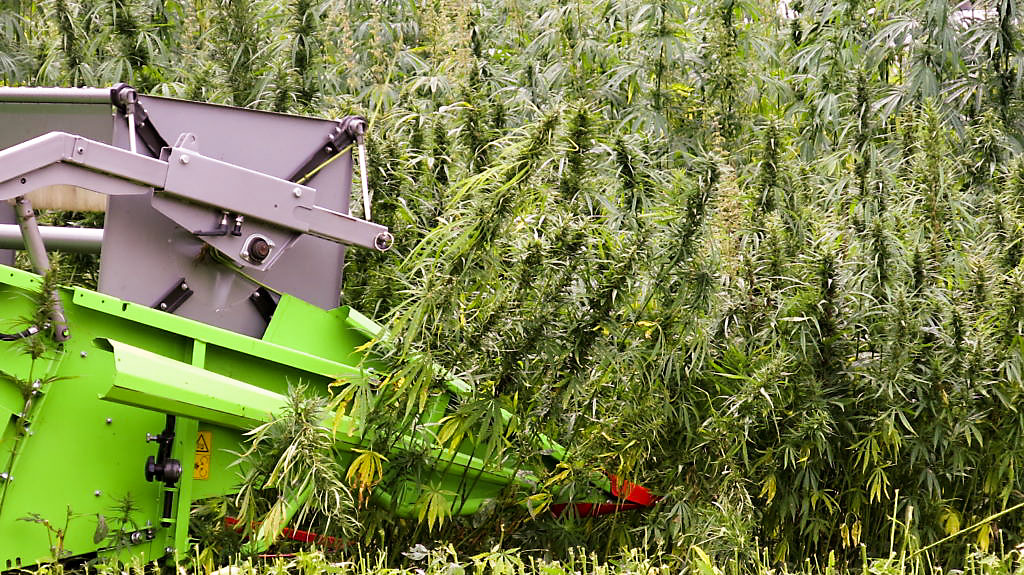 IDOA drafting rules for industrial hemp production, IFB provides input