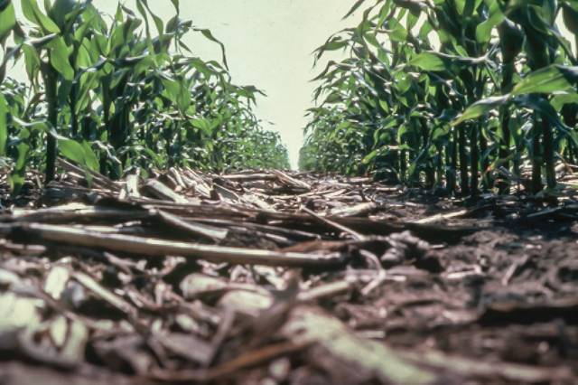 IFB official states importance of NASS nutrient stewardship surveys to be sent to more than 1,000 Illinois farmers
