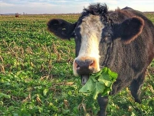 USDA changes final haying and grazing date