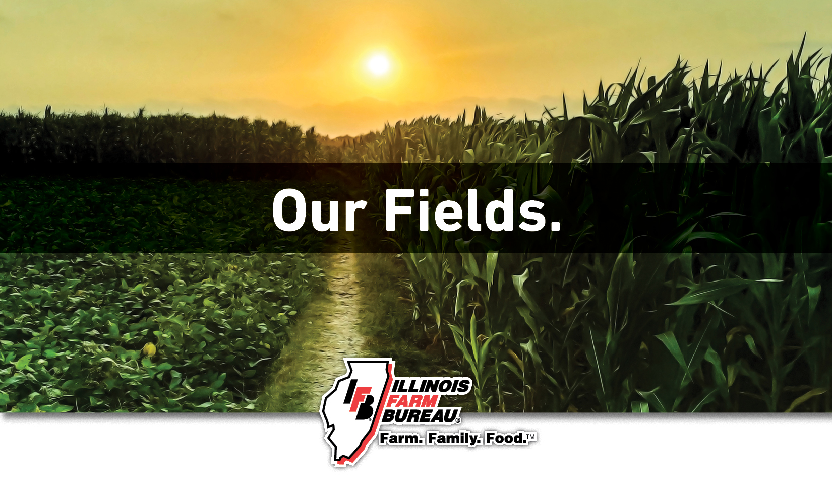 Our Fields